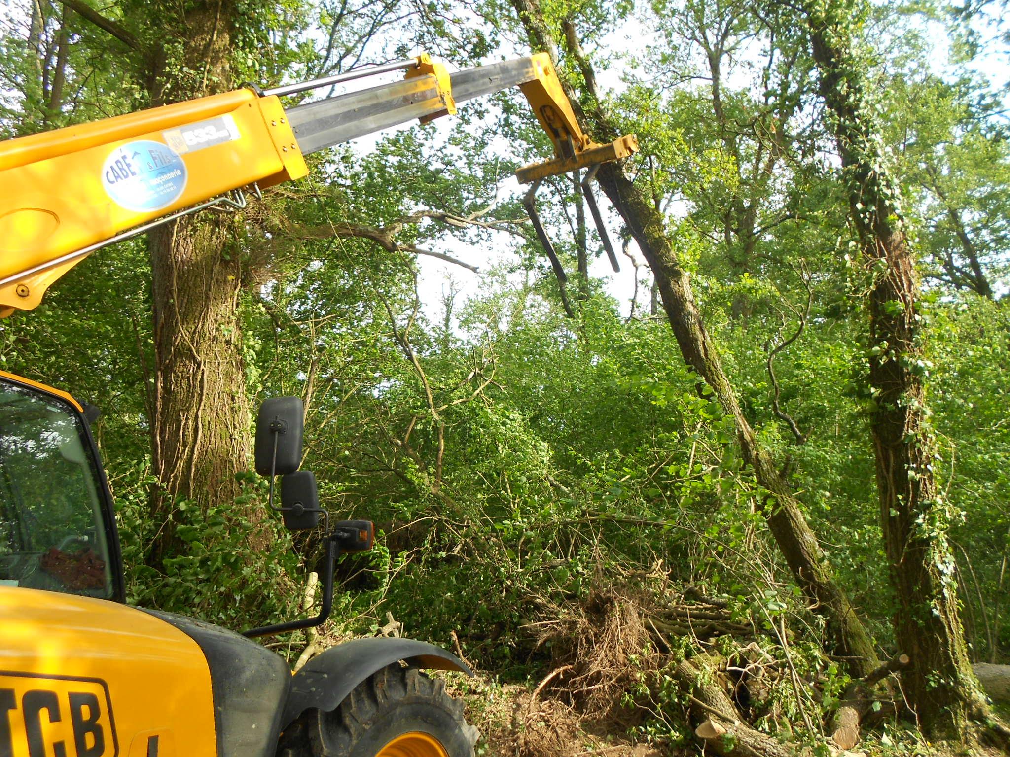 denis se débarrassera de cet arbre prèt à tomber d'un petit coup fourche